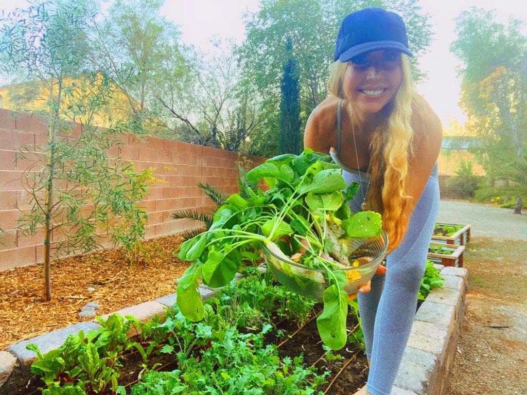 Fall harvest Organic gardening